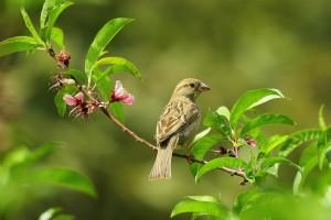 program-pomlad-ko-se-pticki-zenijo