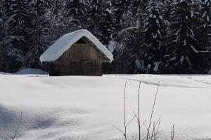 zima-program-zveni-po-domace-4